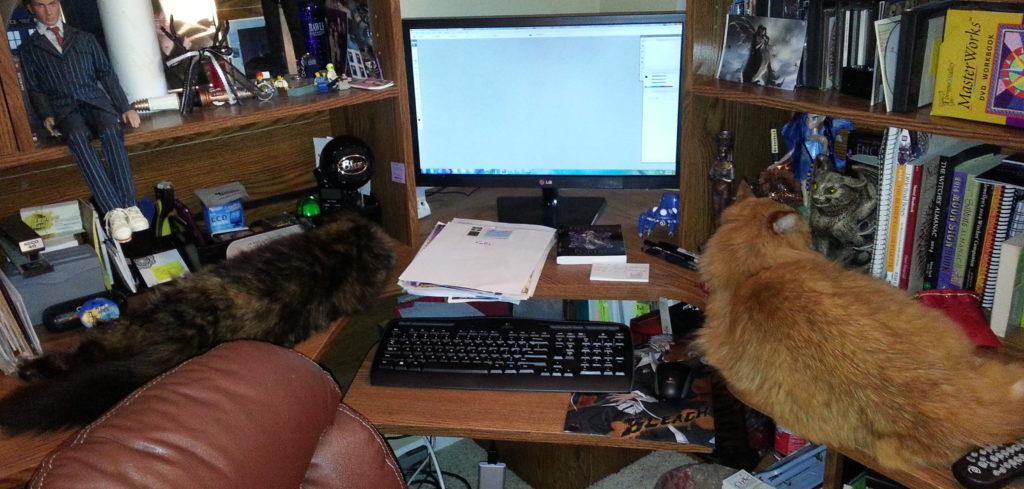 desk cats
